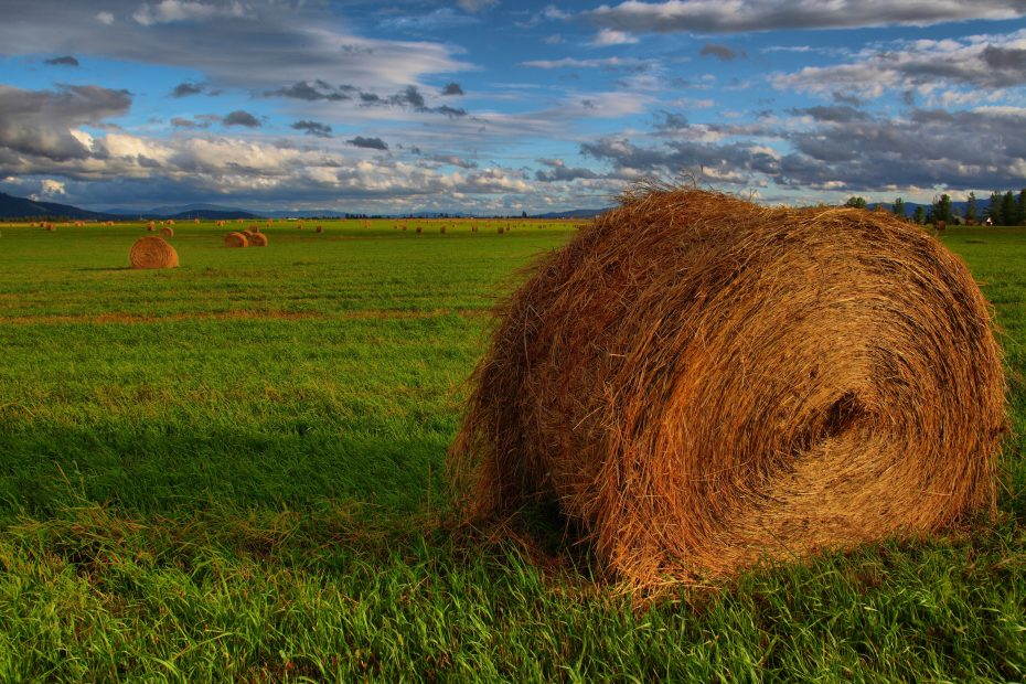 Roll of hay (hay bale)